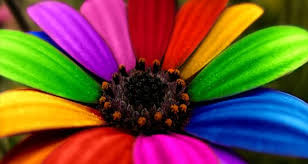 زهرة ملونة